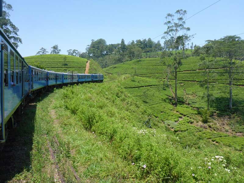 Een incentive reis naar Sri Lanka - Goed geregeld door goMICE